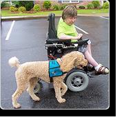 Pets & Service Animals